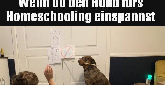 Wenn du den Hund fürs Homeschooling einspannst.. | Lustige ...