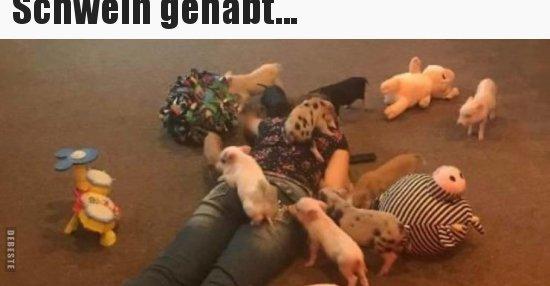 Schwein Gehabt Lustige Bilder Sprüche Witze Echt Lustig