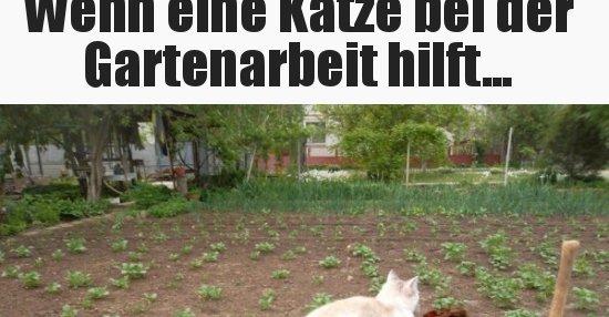 Wenn eine Katze bei der Gartenarbeit hilft... | Lustige ...