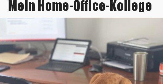 Mein Home-Office-Kollege..   Lustige Bilder, Sprüche ...