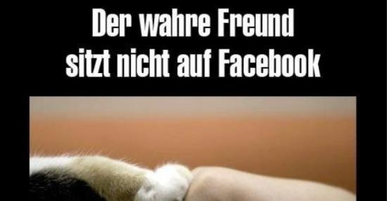 Der Wahre Freund Sitz Nicht Auf Facebook Lustige Bilder