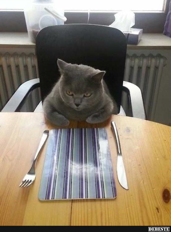 Wo ist mein Essen !!!??? | Lustige Bilder, Sprüche, Witze ...