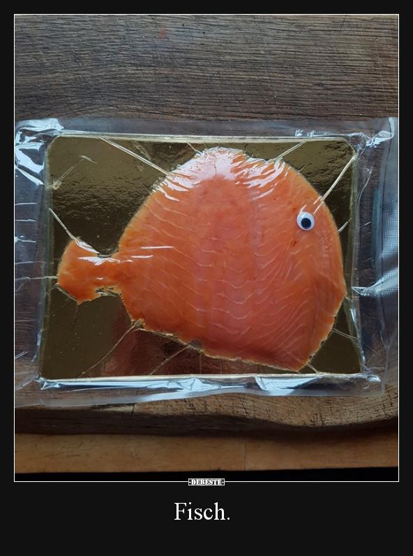 Fisch lustige bilder lustig foto for Fisch bilder