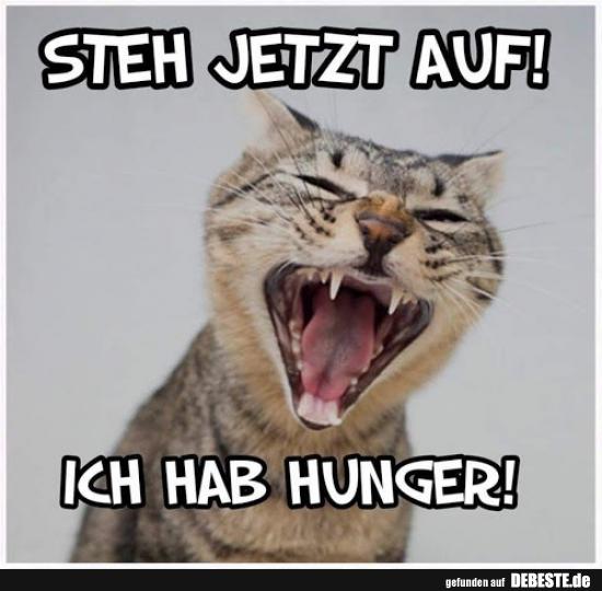 Steh Jetzt Auf Ich Habe Hunger Lustige Bilder Spruche Witze