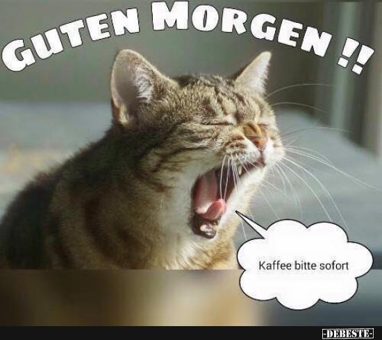 Guten Morgen | DEBESTE.de, Lustige Bilder, lustig foto
