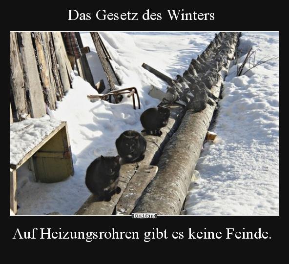 Lustige Bilder Winterende