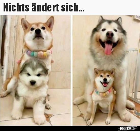 Debeste De Lustige Bilder Witze Videos Und Fb Sprüche