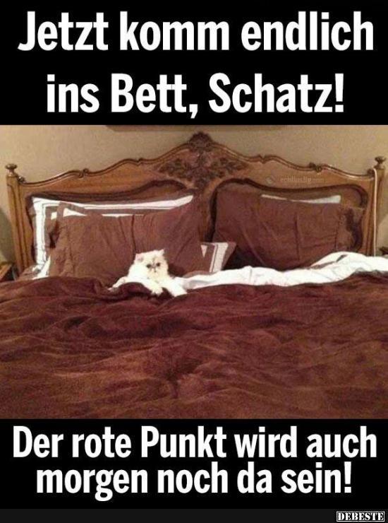 Jetzt komm endlich ins Bett Schatz! | Lustige Bilder