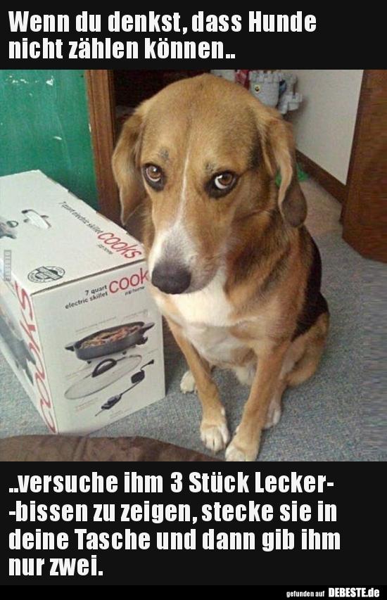 Wenn du denkst, dass Hunde nicht zählen können.. | Lustige ...