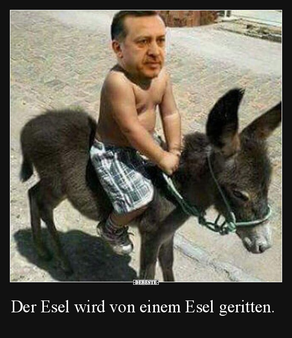 Der Esel Wird Von Einem Esel Geritten.