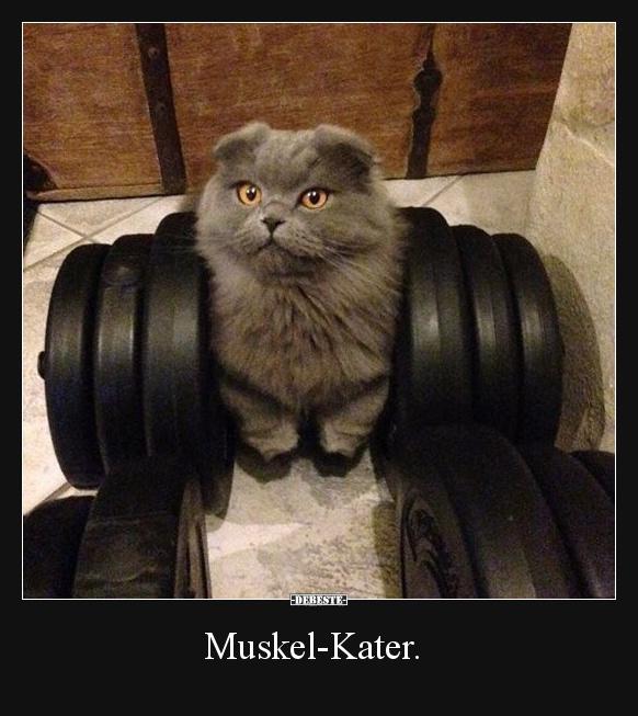 Muskel Kater.   Lustige Bilder, Sprüche, Witze, echt lustig