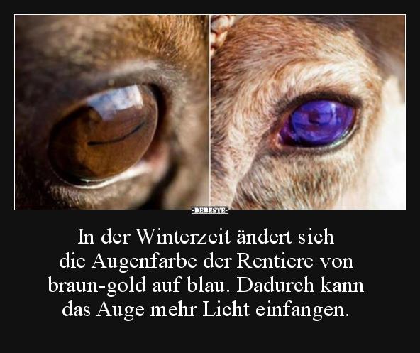 In Der Winterzeit Andert Sich Die Augenfarbe Der Rentiere