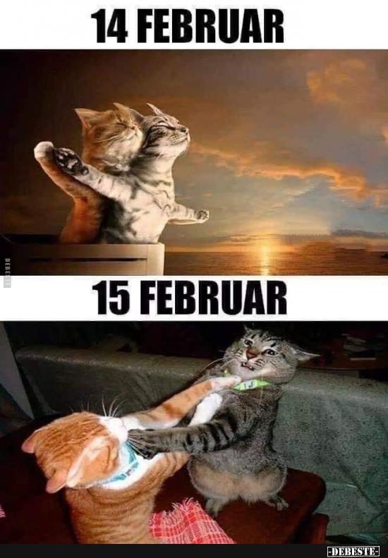 14 Februar Vs 15 Februar Lustige Bilder Spruche Witze Echt Lustig