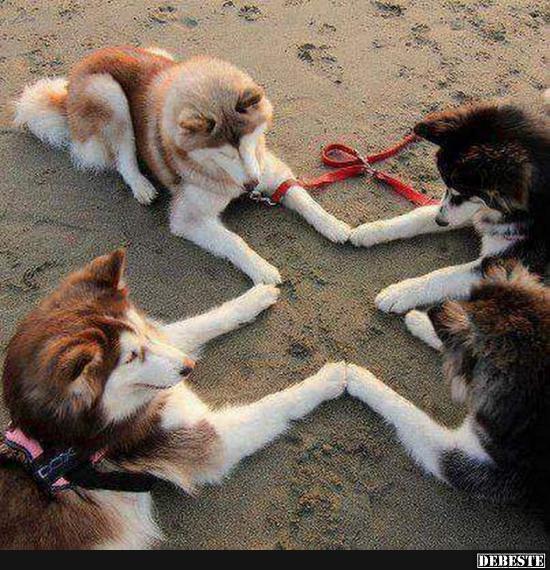 Einer für alle, alle für Einen! | Lustige Bilder, Sprüche, Witze