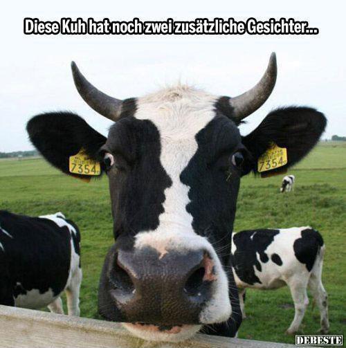 Kuh mit drei Gesichtern | Lustige Bilder, Sprüche, Witze, echt lustig