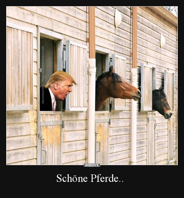 Schöne Pferde Lustige Bilder Sprüche Witze Echt Lustig