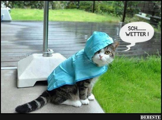 Echt lustig bilder search results calendar 2015 - Wetterbilder lustig ...
