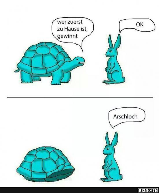 schlaue sprüche bilder Schlaue Schildkröte | Lustige Bilder, Sprüche, Witze, echt lustig schlaue sprüche bilder