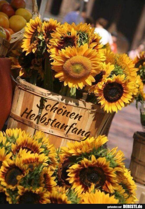 Schönen Herbstanfang.. | Lustige Bilder, Sprüche, Witze ...