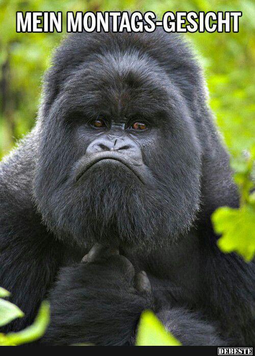 Mein Montags Gesicht Lustige Bilder Sprüche Witze Echt Lustig