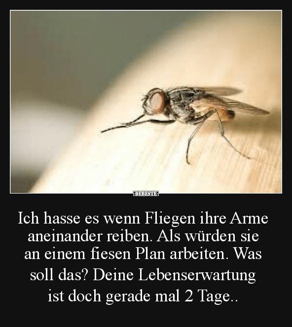 Fliegen Witze