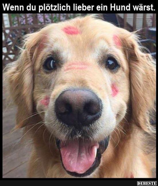 Wenn Du Plotzlich Lieber Ein Hund Warst Lustige Bilder Spruche