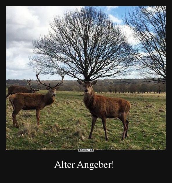 Alter Angeber!