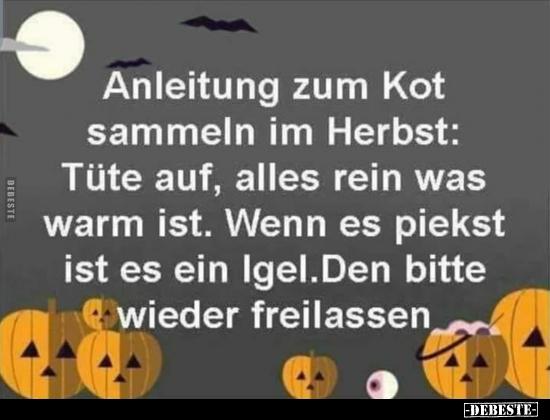 Anleitung Zum Kot Sammeln Im Herbst Tüte Auf Alles Rein