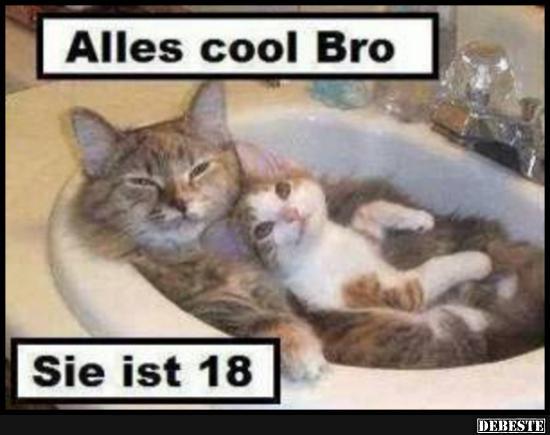 Alles cool Bro.. | Lustige Bilder, Sprüche, Witze, echt lustig