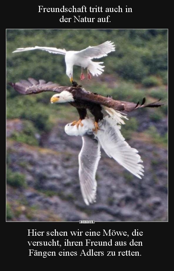 Freundschaft tritt auch in der Natur auf..   Lustige ...