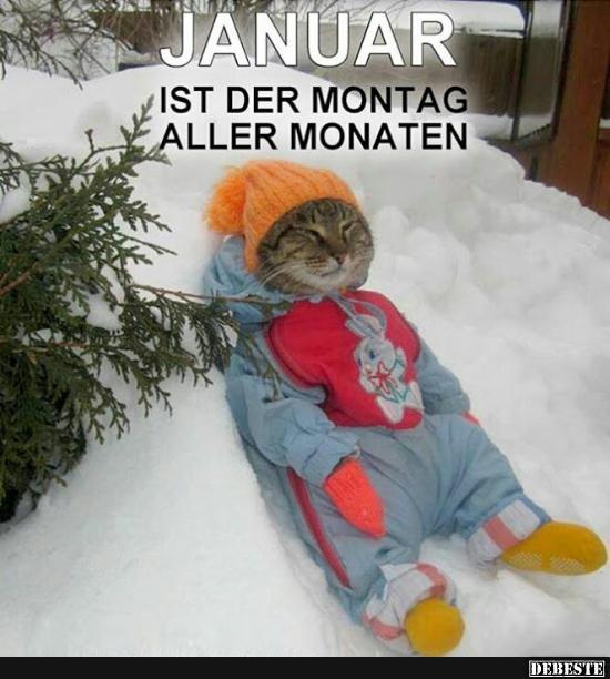 januar sprüche Der Januar ist der Montag des Jahres.. | Lustige Bilder, Sprüche  januar sprüche