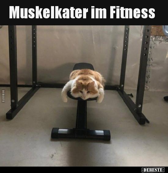 Muskelkater im Fitness.. | Lustige Bilder, Sprüche, Witze