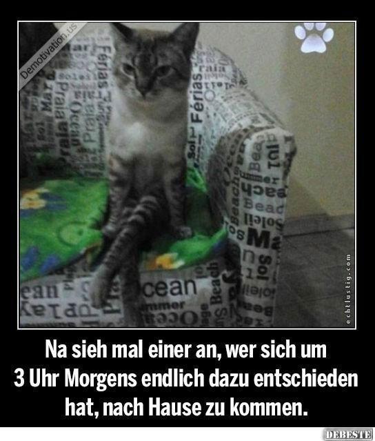 Witzige Katzen Zitate Wunderschone Zitate Uber Das Leben