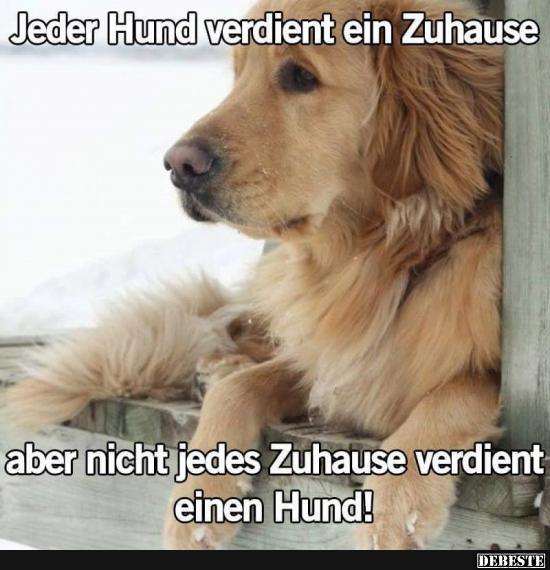 Jeder Hund Verdient Ein Zuhause Lustige Bilder Sprüche
