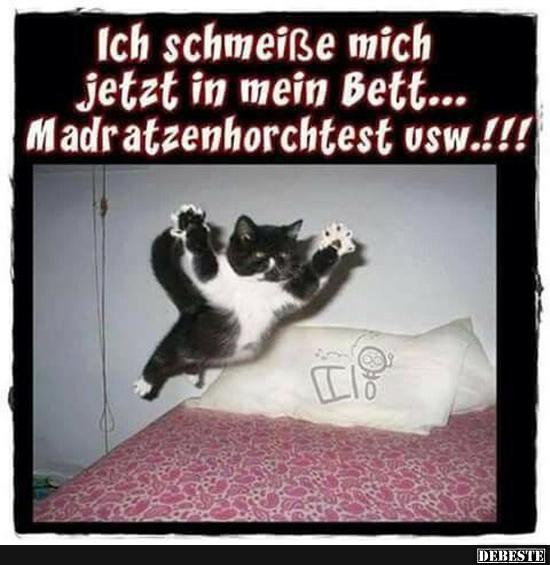 gute nacht lustige bilder lustig foto. Black Bedroom Furniture Sets. Home Design Ideas