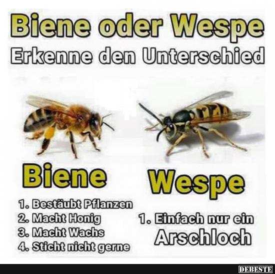Unterschied Wespe Und Biene