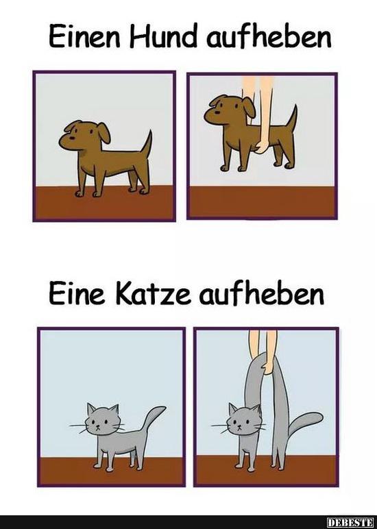 Katze und sprüche hund Hundesprüche: Top