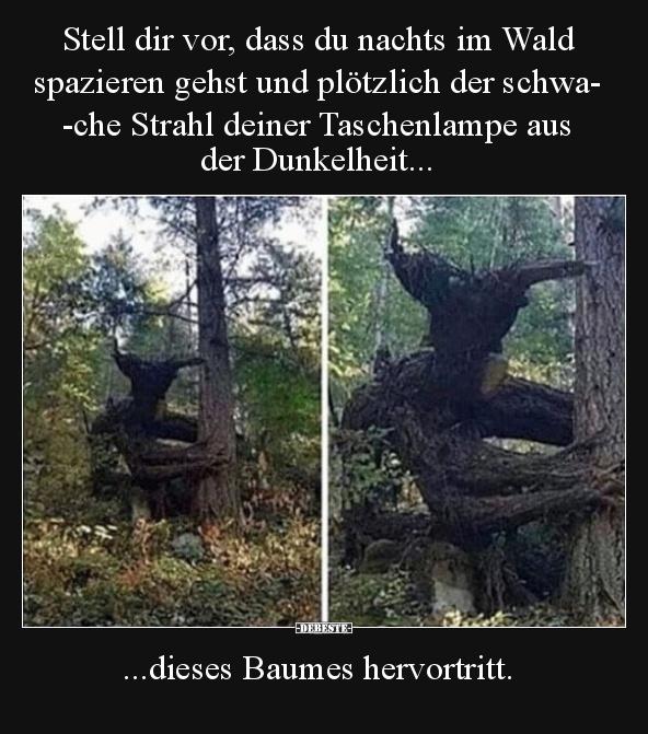 Sprüche Wald Lustig