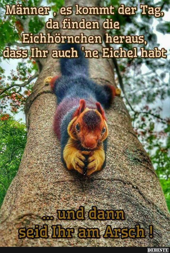 Männer, es kommt der Tag, da finden die Eichhörnchen