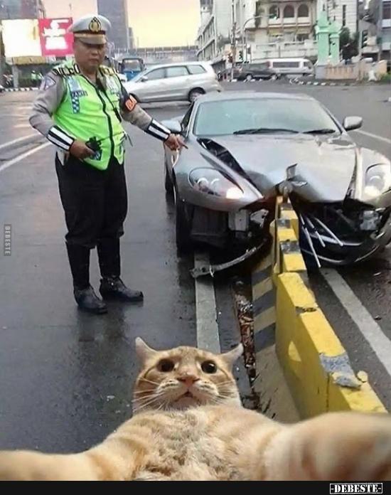 B And B Auto >> Böse Katze.. | Lustige Bilder, Sprüche, Witze, echt lustig