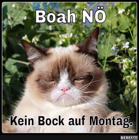 Kein Bock Auf Montag Lustige Bilder Spruche Witze Echt Lustig