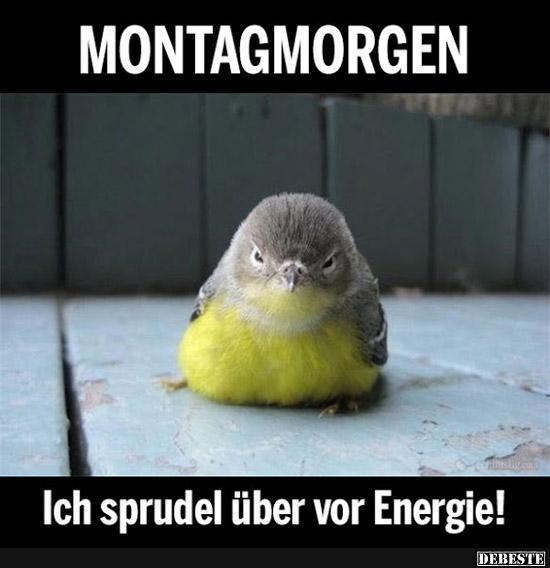 Montagmorgen Ich Sprudel über Vor Energie Lustige