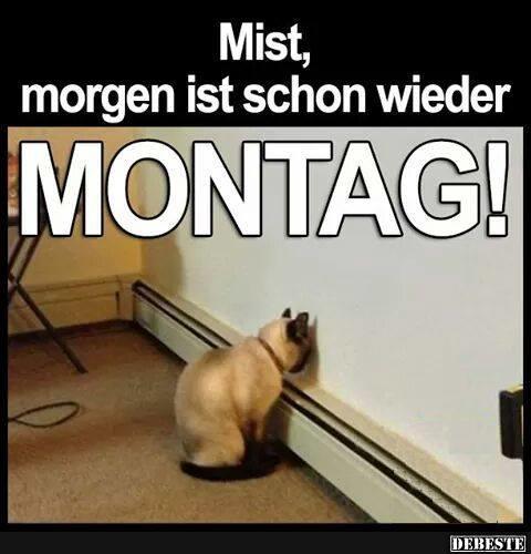 morgen ist montag sprüche Mist, morgen ist schon wieder Montag! | Lustige Bilder, Sprüche  morgen ist montag sprüche