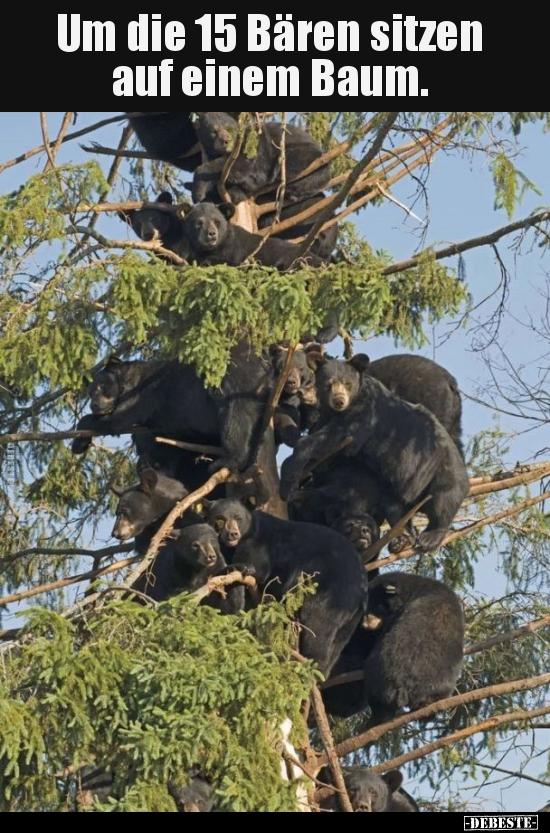 Um Die 15 Bären Sitzen Auf Einem Baum Lustige Bilder