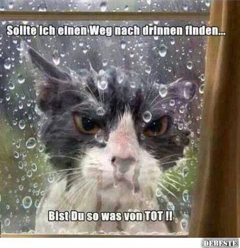 Die Katze Bei Regen Draußen Lassen Lustige Bilder Sprüche