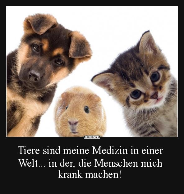 sprüche mit tieren Bilder Mit Tieren Und Sprüchen — hylen.maddawards.com sprüche mit tieren