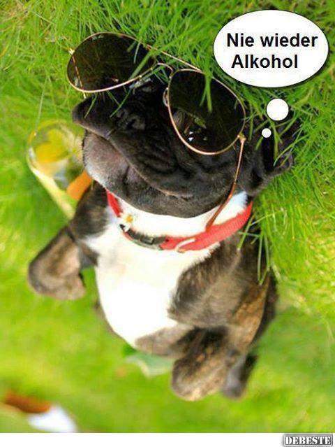 Nie wieder alkohol lustige bilder spr che witze - Lustige bilder alkohol ...