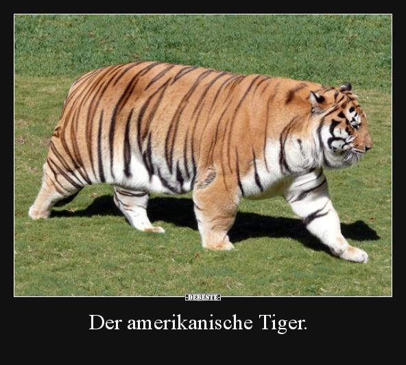 Der Amerikanische Tiger Lustige Bilder Sprüche Witze