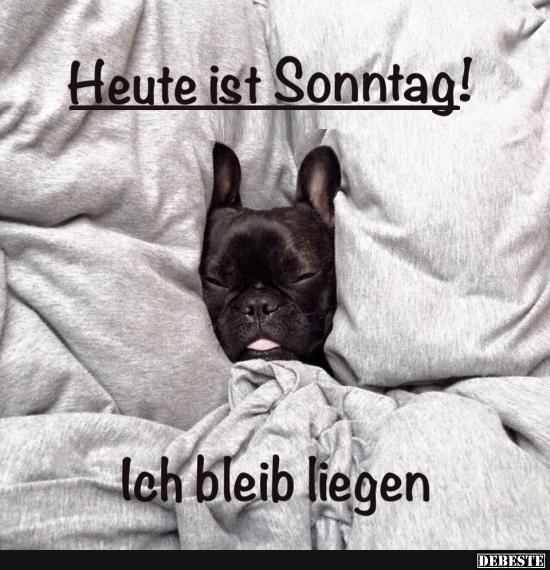 lustige sprüche zum sonntag Heute ist Sonntag! | Lustige Bilder, Sprüche, Witze, echt lustig lustige sprüche zum sonntag