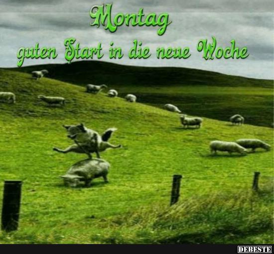 guten start in die neue woche sprüche Montag.. guten Start in die neue Woche.. | Lustige Bilder, Sprüche  guten start in die neue woche sprüche